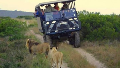 Game Drives and Safaris
